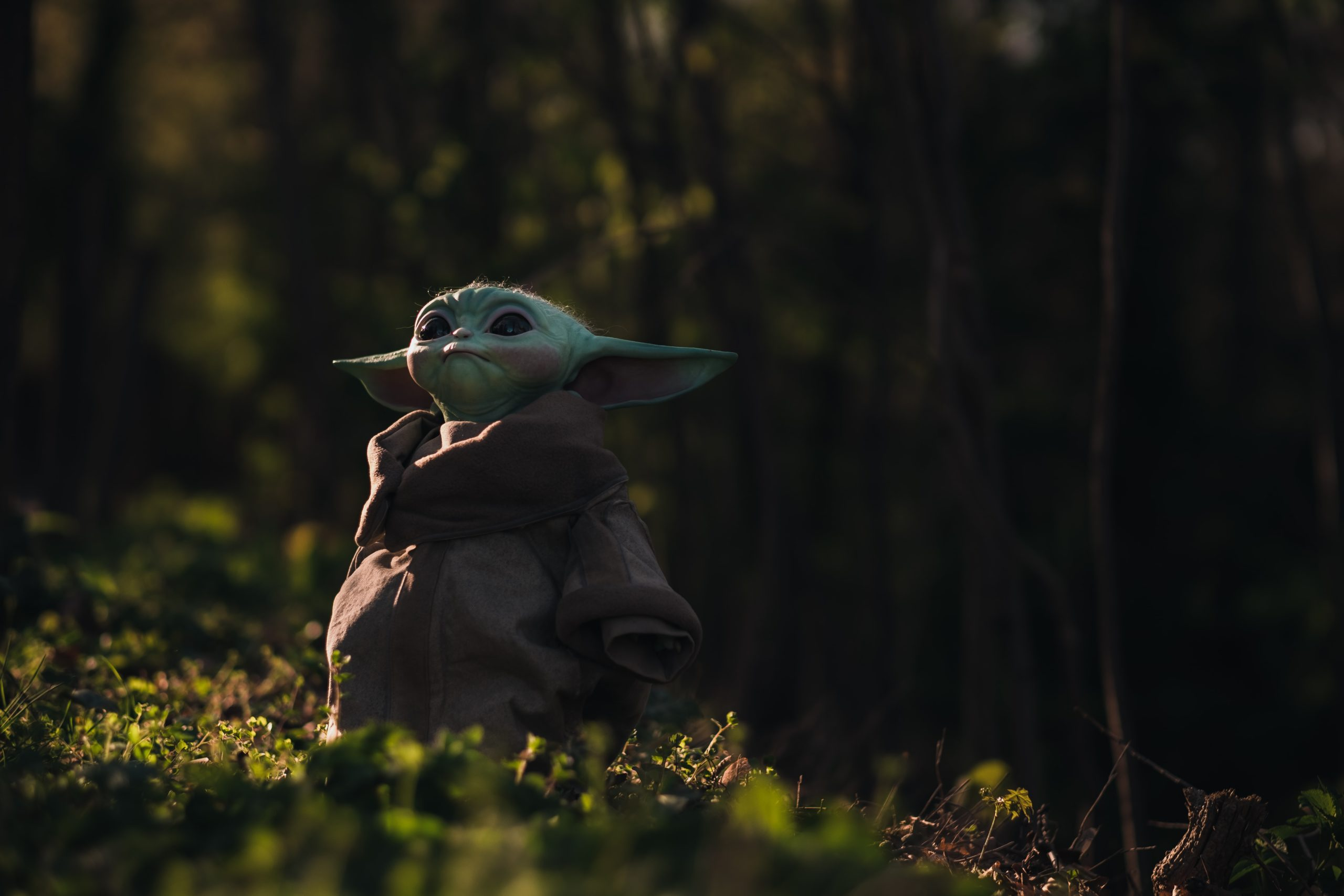 A bird sitting on top of a lush green forest